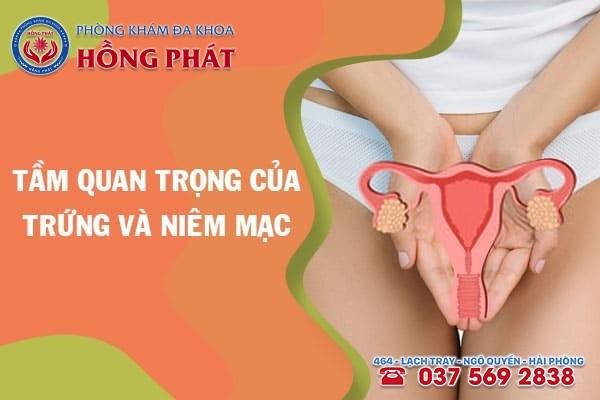 Trứng và niêm mạc có vai trò quan trọng trong việc thụ thai